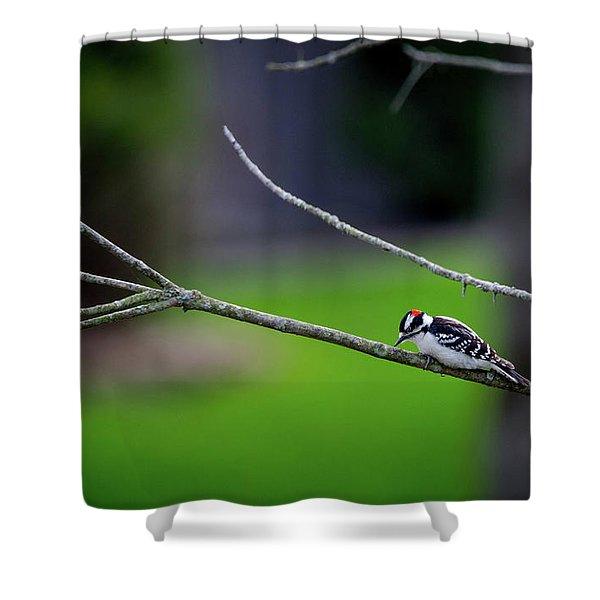 The Downey Woodpecker Shower Curtain