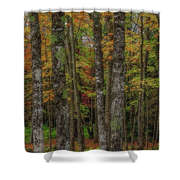 The Fall Woods Shower Curtain