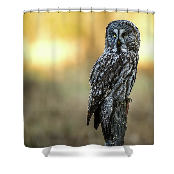 The Great Gray Owl In The Morning Shower Curtain