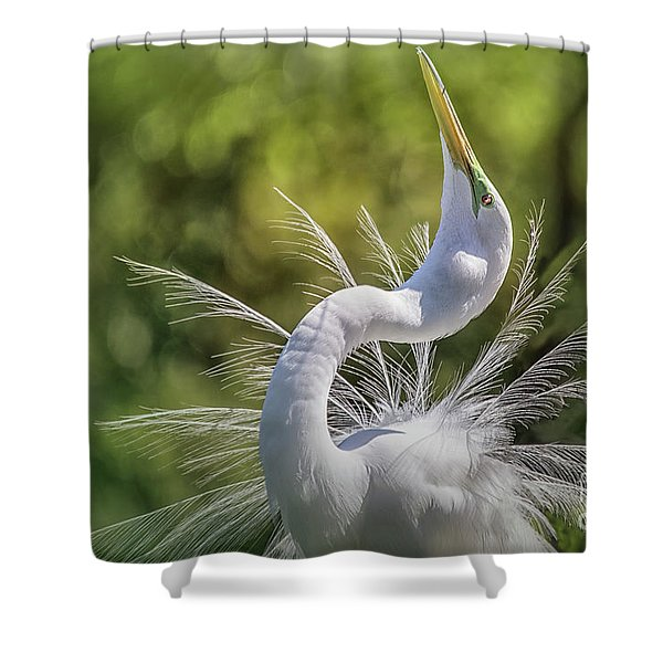The Great White Egret Mating Dance Shower Curtain