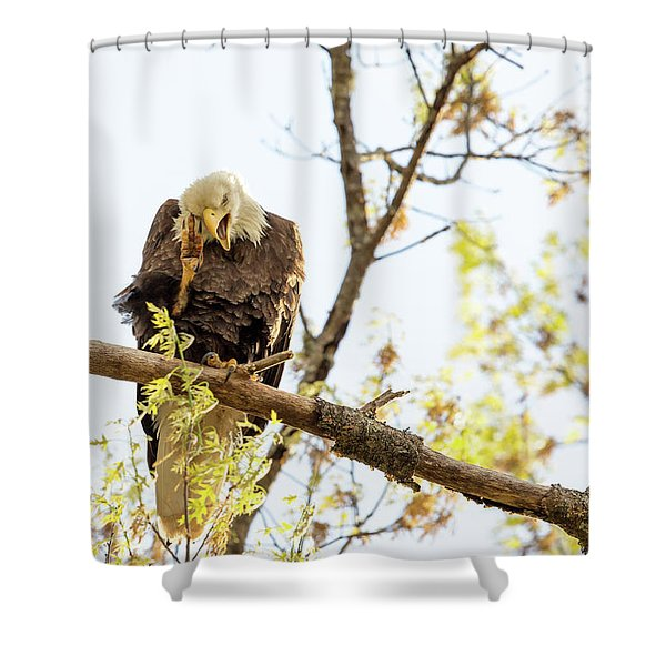 The Itch Shower Curtain