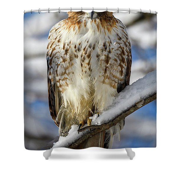 The Look, Red Tailed Hawk 1 Shower Curtain