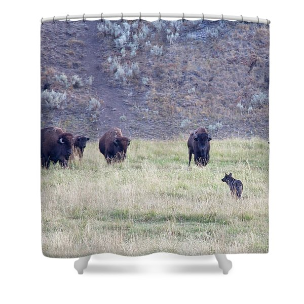 The Naming Of Spitfire Shower Curtain