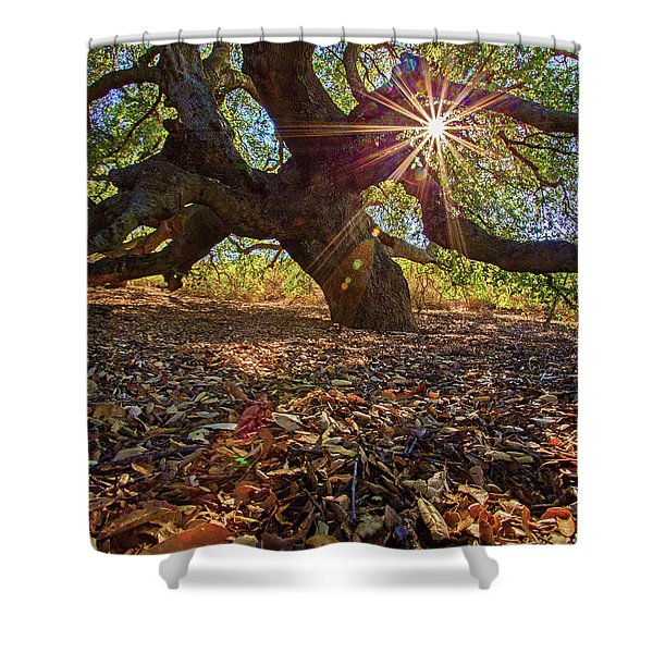The Old Oak Shower Curtain