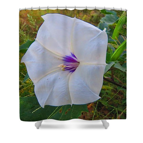 The Perfect Flower - Sacred Datura Shower Curtain