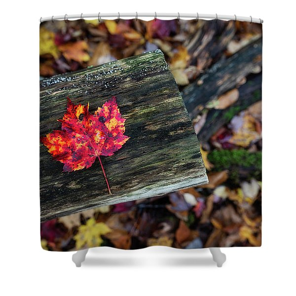 The Reason They Call It Fall Shower Curtain