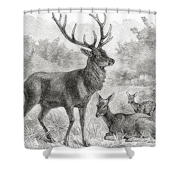 The Red Deer  Cervus Elaphus Shower Curtain