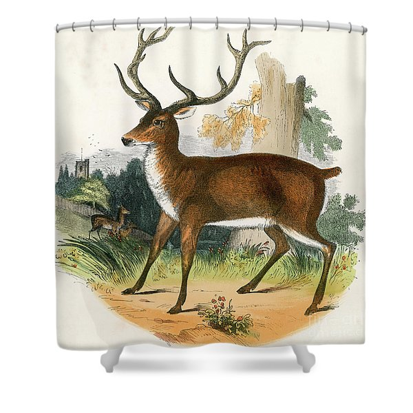 The Red Deer  Engraving 19th Century Shower Curtain