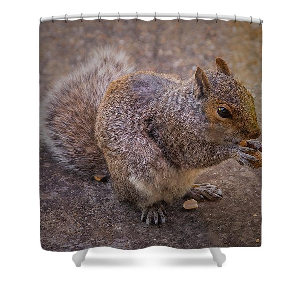 The Squirrel - Cornwall Shower Curtain