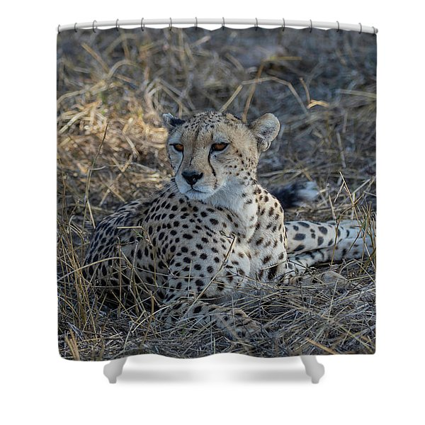 Cheetah In Repose Shower Curtain
