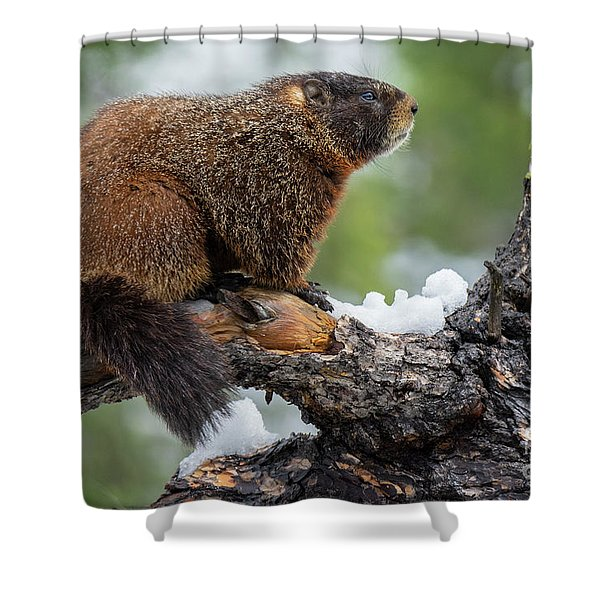 The Surveyor Shower Curtain
