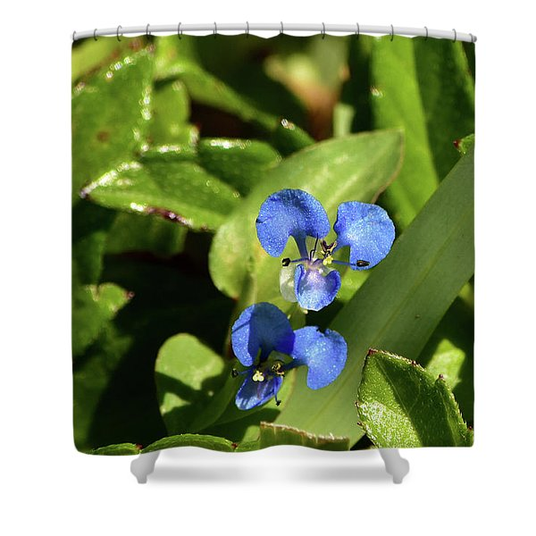 The Tiny Wonder Of Dayflowers Shower Curtain