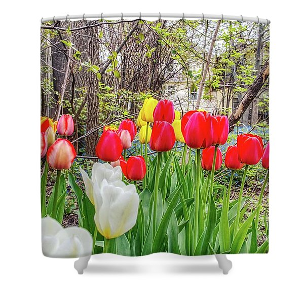 The Tulips Are Out. Shower Curtain