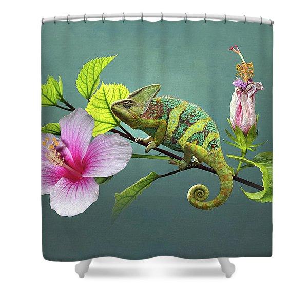 The Veiled Chameleon Of Florida Shower Curtain