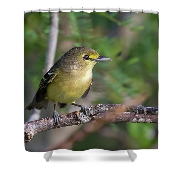 Thick-billed Vireo Shower Curtain