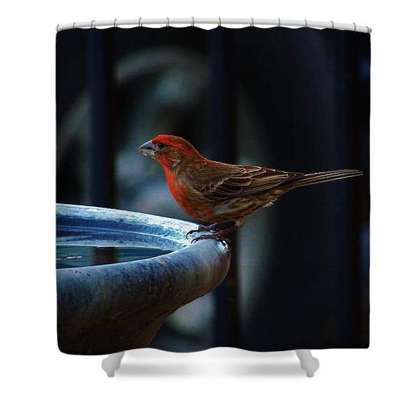 Thirsty Shower Curtain