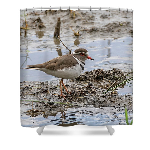 Three-banded Plover Shower Curtain