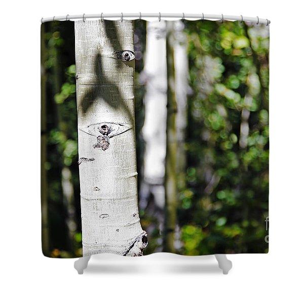 Through The Aspen Forest Shower Curtain