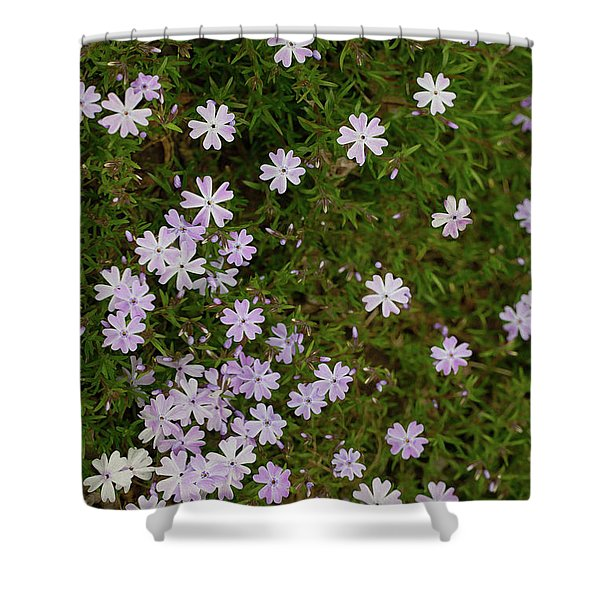 Shower Curtain featuring the photograph Tiny Phlox by Emily Johnson