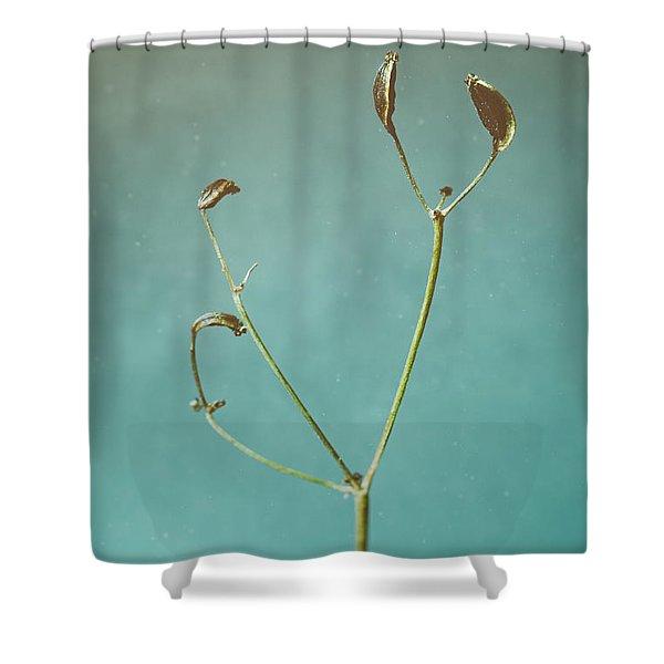 Tiny Seed Pod Shower Curtain
