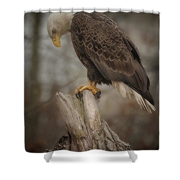Tired Eagle Dad  Shower Curtain