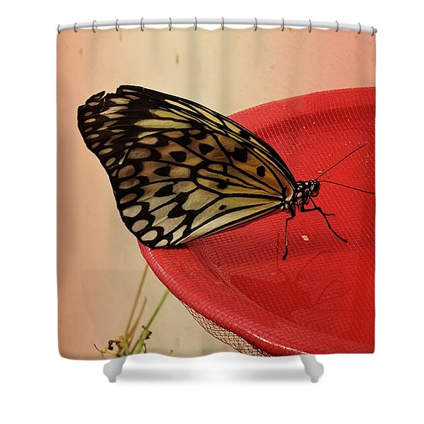 Torn Butterfly Shower Curtain