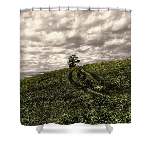 Trail To A Tree Shower Curtain