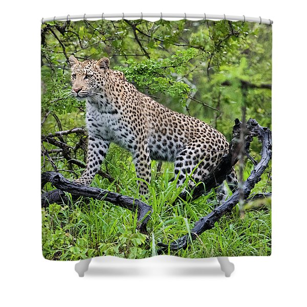 Tree Climbing Leopard Shower Curtain