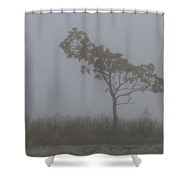 Tree In Fog Shower Curtain