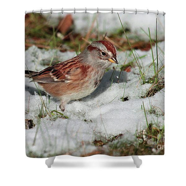 Tree Sparrow In Snow Shower Curtain