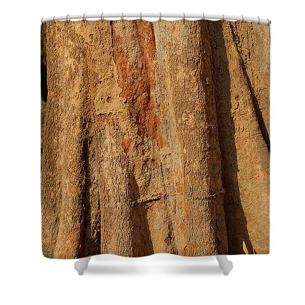 Tree Trunk And Bark Of Chambak Shower Curtain
