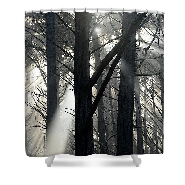Trees And Fog Shower Curtain