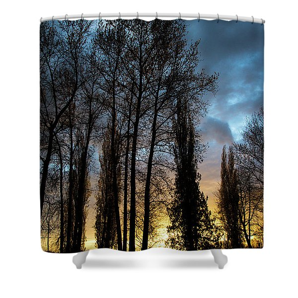 Trees In Blue Hour Shower Curtain