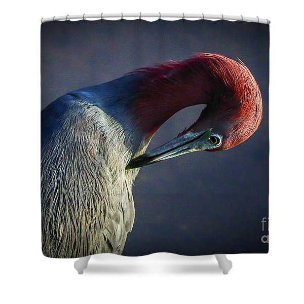 Shower Curtain featuring the photograph Tricolor Preening by Tom Claud
