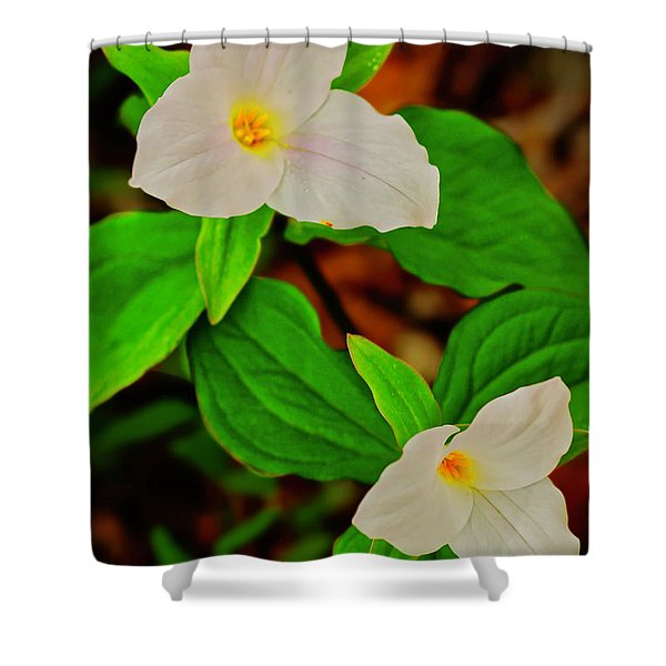 Shower Curtain featuring the photograph Trilliums by Meta Gatschenberger