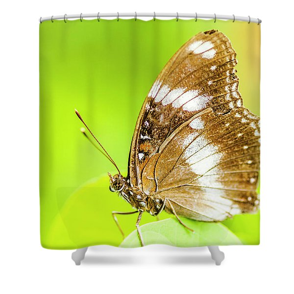 Tropical Exotics Shower Curtain