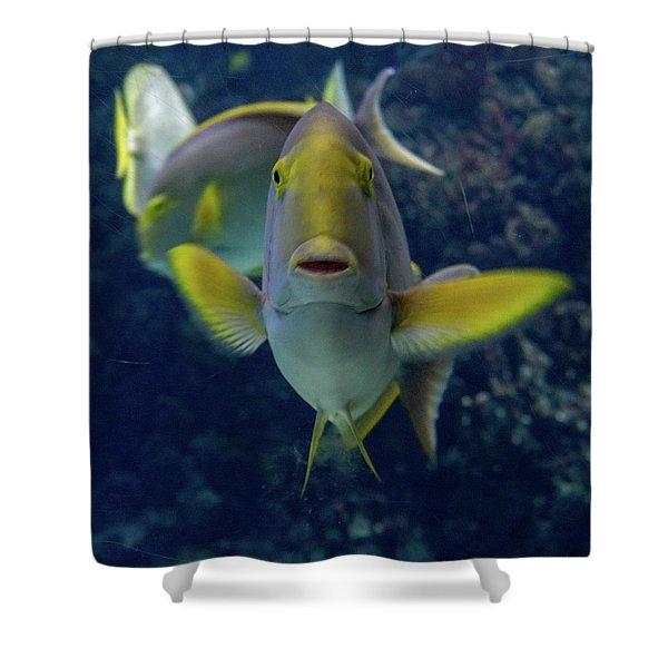 Shower Curtain featuring the photograph Tropical Fish Poses. by Anjo Ten Kate