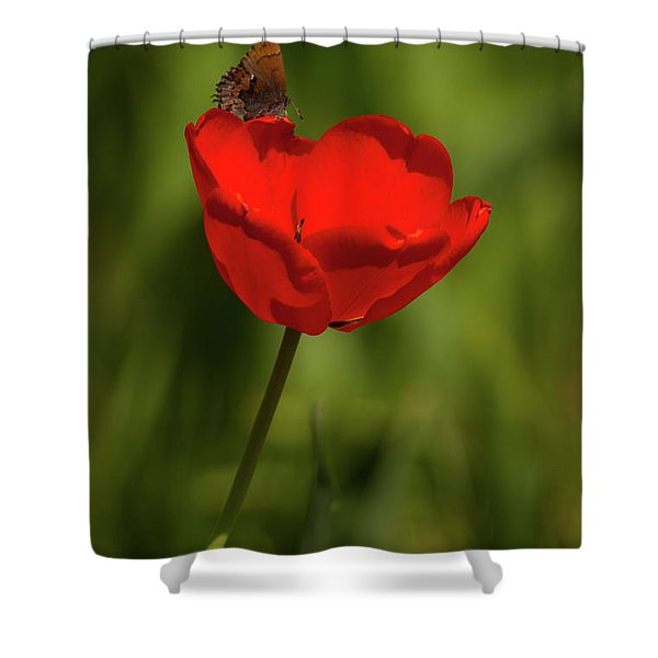 Tulip And Skipper Shower Curtain