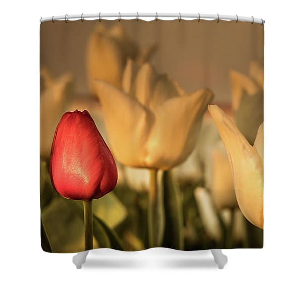 Shower Curtain featuring the photograph Tulip Field by Anjo ten Kate