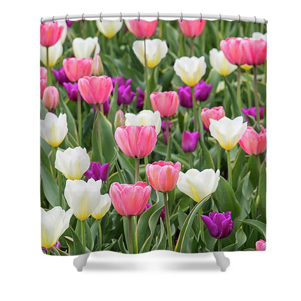 Shower Curtain featuring the photograph Tulip Field by Emily Johnson
