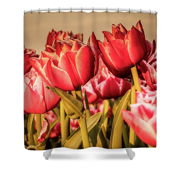 Shower Curtain featuring the photograph Tulip Fields by Anjo Ten Kate