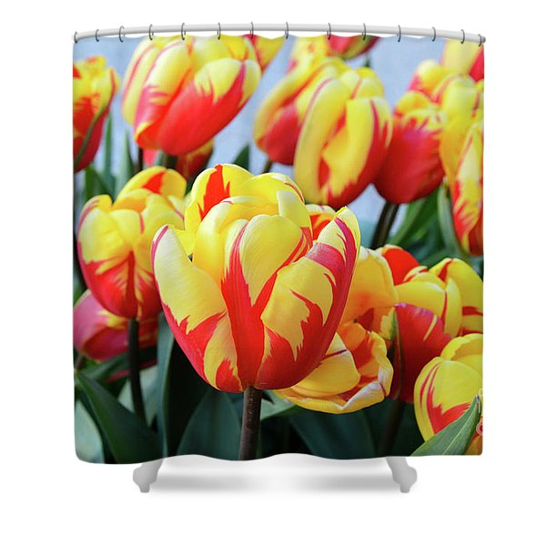 Tulips And Tiger Stripes Shower Curtain