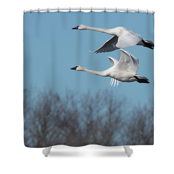 Tundra Swan Duo Shower Curtain
