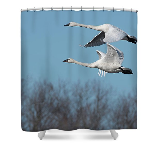 Tundra Swan Duo Shower Curtain