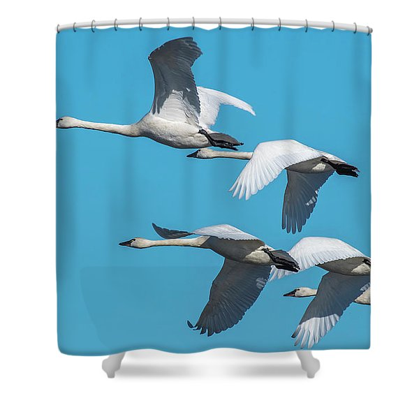 Tundra Swans In Flight Shower Curtain