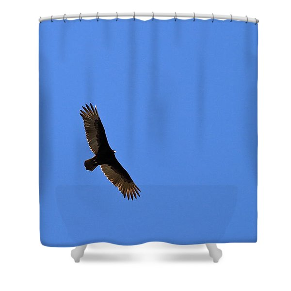 Turkey Vulture Soaring Shower Curtain