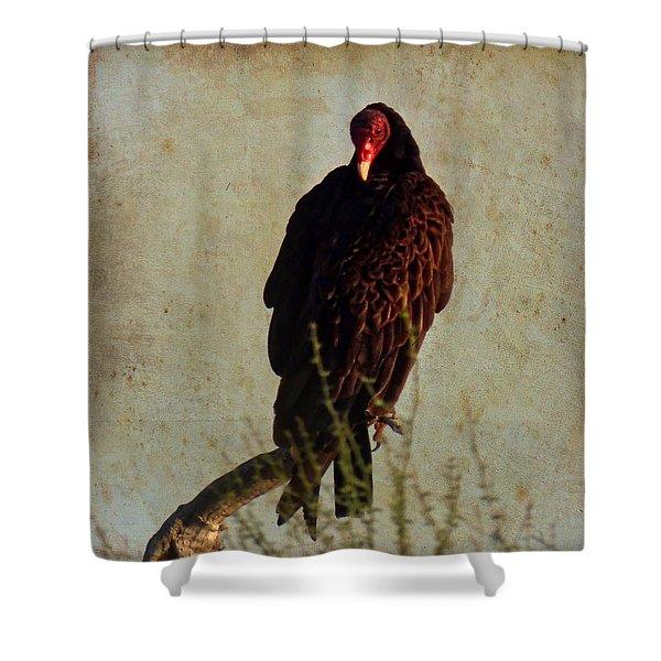 Turkey Vulture Vintage Shower Curtain