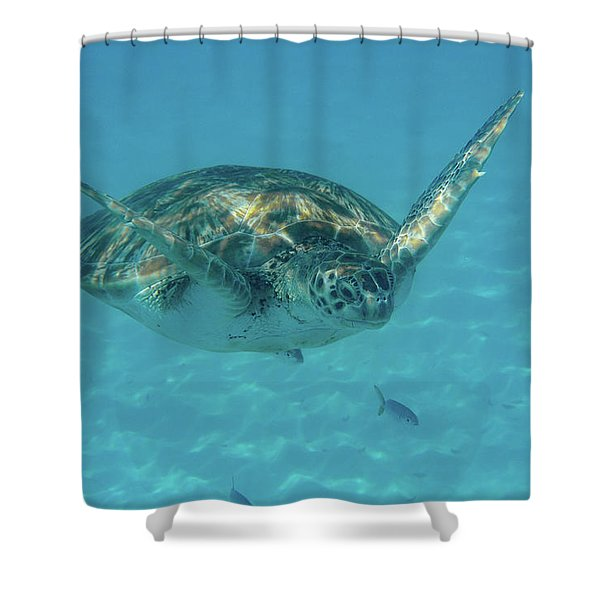 Turtle Approaching Shower Curtain
