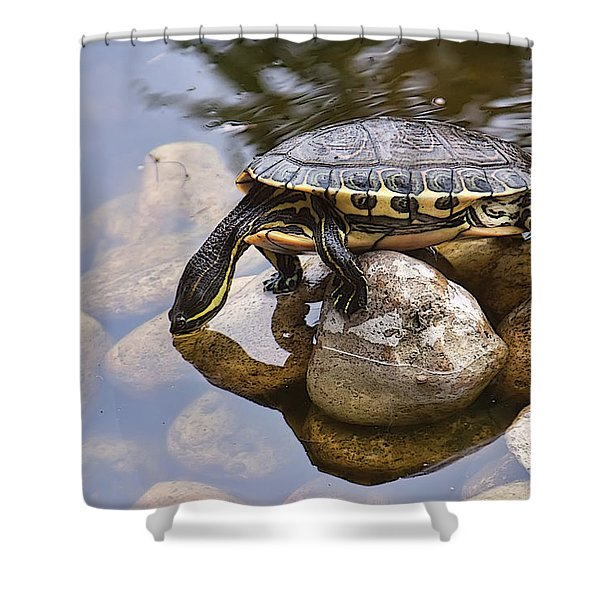 Turtle Drinking Water Shower Curtain