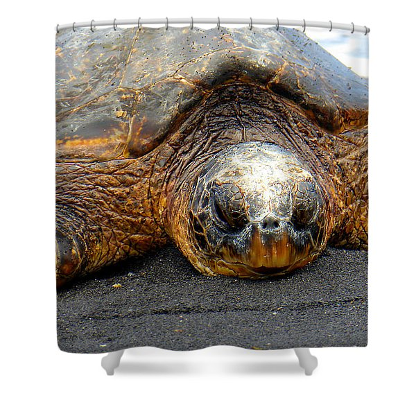 Turtle Rest Stop Shower Curtain